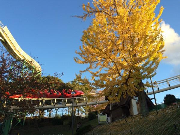 ひらかたパーク ひらパー イルミネーション 光の遊園地 お得なチケット 料金 点灯時間 ナイトフリーパス ナイト入園 レッドファルコン ジェットコースター