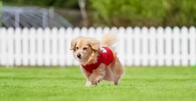 ホテルアナガ 淡路島 ドッグラン ドギーガーデン 犬と泊まれる 料金 ドギーヴィラ 宿泊プラン 口コミ ペット