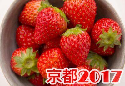 イチゴ狩り 予約 混雑 時期 期間 駐車場 スポット 品種 練乳 持ち帰り 関西 京都