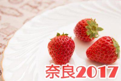 イチゴ狩り 予約 混雑 時期 期間 駐車場 スポット 品種 練乳 持ち帰り 関西 奈良