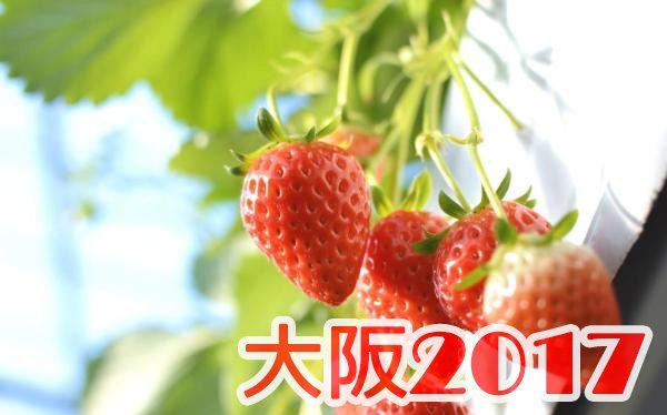 イチゴ狩り 予約 混雑 時期 期間 駐車場 スポット 品種 練乳 持ち帰り 一覧 関西 大阪