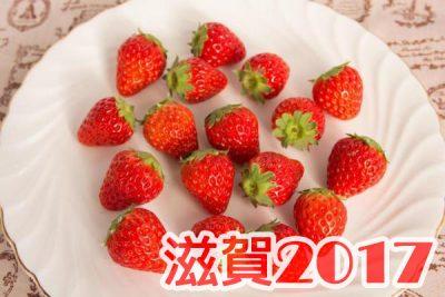 イチゴ狩り 予約 混雑 時期 期間 駐車場 スポット 品種 練乳 持ち帰り 関西 滋賀