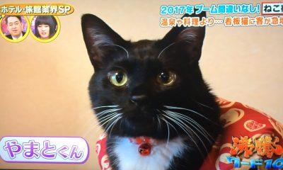 沸騰ワード 猫宿 2月3日 ねこ女将 看板猫 草津温泉 中村屋旅館