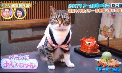 沸騰ワード 猫宿 2月3日 ねこ女将 看板猫 天童温泉 松伯亭 あづま荘 カレンダー まいちゃんまんじゅう