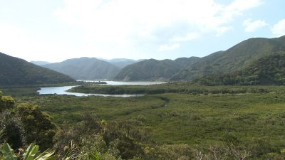 マングローブ原生林