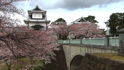内藤剛志さんが桜咲く金沢へ
