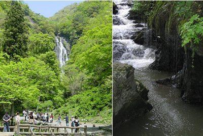 よ~いドン! たむらけんじ 商店街 いきなり日帰りツアー 7月18日 岡山 真庭 神庭の滝