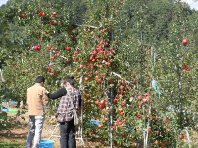 あさパラ 南信州バスツアー JTB 三和観光農園 りんご狩り 食べ放題