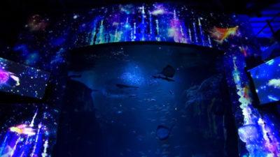 新江ノ島水族館 プロジェクションマッピング ナイトワンダーアクアリウムPart2