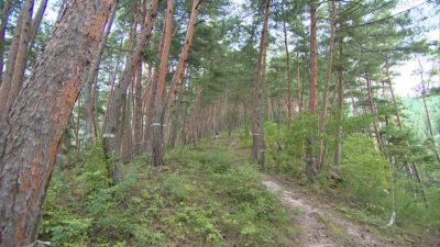 松茸山 別所和苑 松茸狩り体験