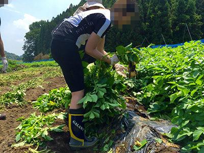 ライドエクスペリエンス 那須里山ファームライド 収穫体験