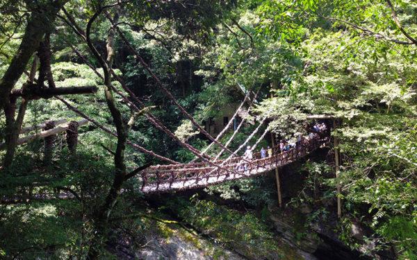 祖谷 かずら橋