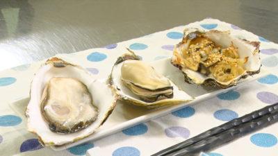 広田湾の牡蠣