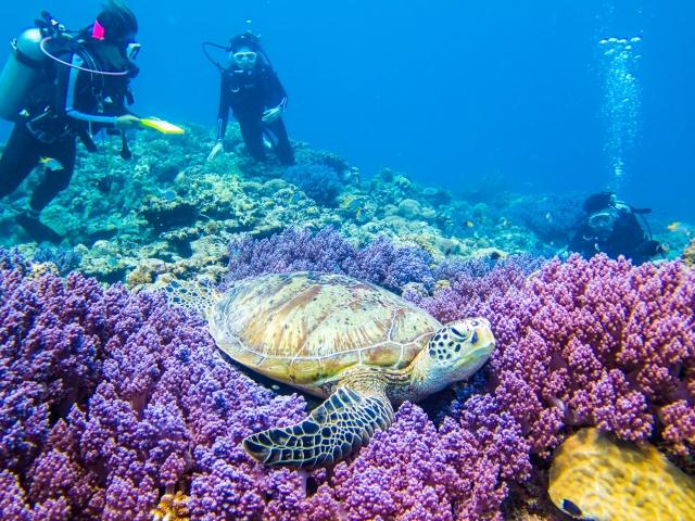 朝だ!生です旅サラダ ゲストの旅 4月28日 沖縄 波照間島 剛力彩芽 ダイビング