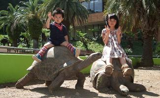 体感型動物園 iZoo(イズー) ガラパゴスゾウガメ