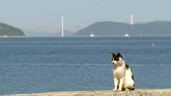 猫の島 佐柳島