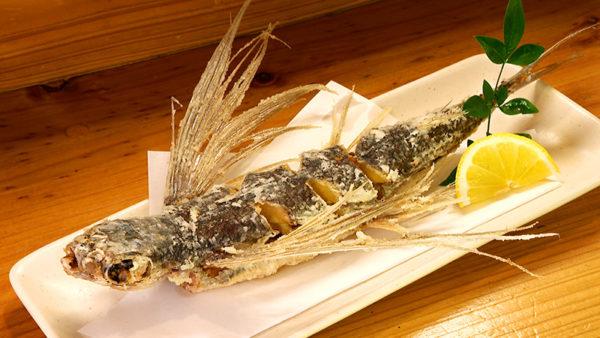 屋久島 地魚料理 若大将 トビウオ