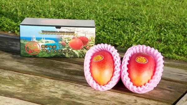 種子島産アップルマンゴー