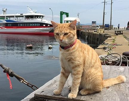 朝だ!生です旅サラダ ゲストの旅 9月29日 福岡 博多 佐藤仁美 猫の島