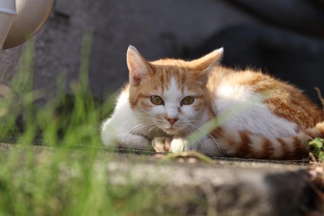 朝だ!生です旅サラダ ゲストの旅 10月20日 川上麻衣子 宮城県 猫の島 田代島