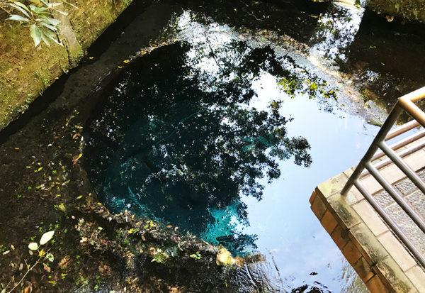 三島 柿田川湧水群