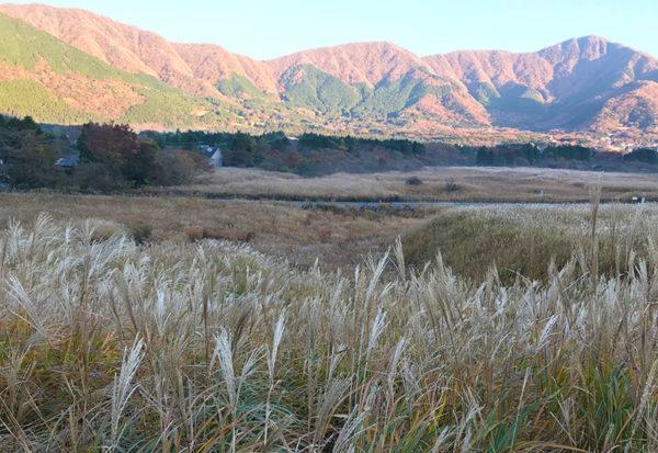 仙石原 すすき草原