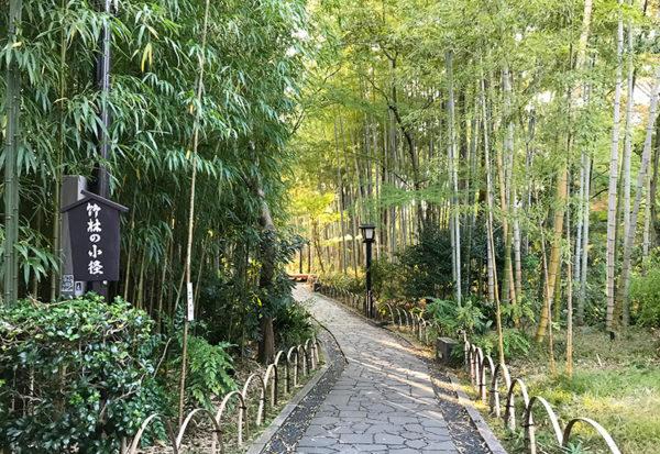 修善寺 竹林の小径
