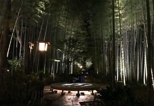 修善寺 竹林の小径 ライトアップ