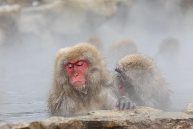 ヒルナンデス 雪景色が見える絶景温泉 ベスト10 プロが教える