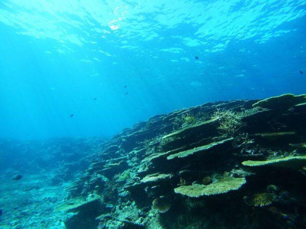 沖縄 宮古島 アクアベース シュノーケリング 池間ブルー サンゴ礁