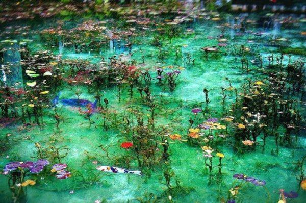 岐阜 関市 モネの池