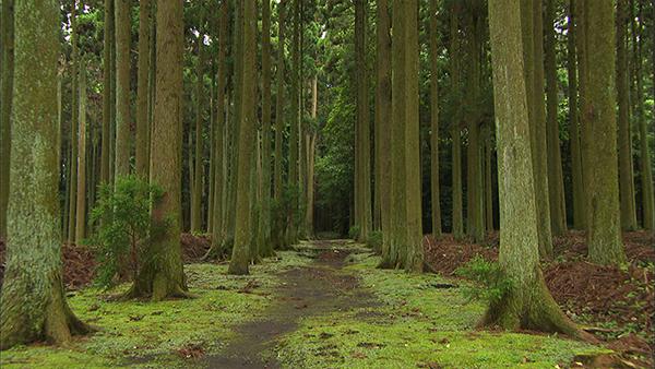 朝だ!生です旅サラダ ゲストの旅 伊豆大島 波知加麻神社