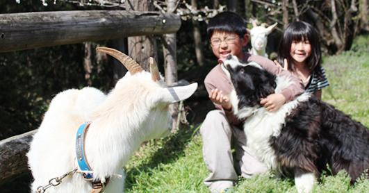 おはよう朝日 おは朝 バスツアー エイチアイエス HIS 松茸あばれ食い 近江牛 滋賀 魚松 成田ふれあい牧場