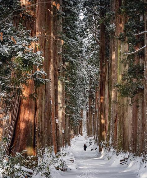 スッキリ ハッシュタグの旅 信州 長野 戸隠神社奥社杉並木
