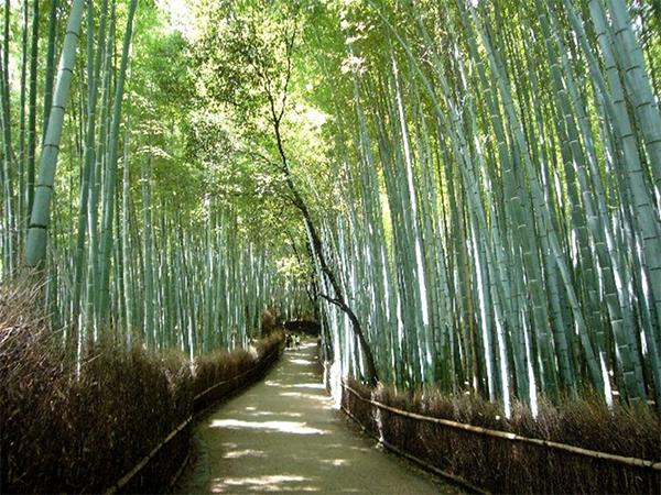 ヒルナンデス 京都 旅行 観光 女子旅 絶景 嵐山 竹林