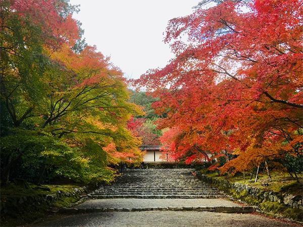 ヒルナンデス 京都 旅行 観光 女子旅 絶景 嵐山 二尊院