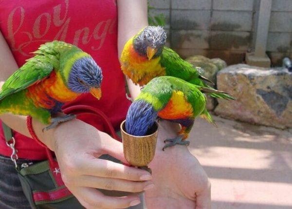 OKINAWAフルーツらんど 鳥の餌やり