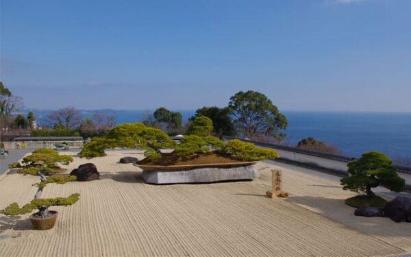 アカオ ハーブ&ローズガーデン 世界最大級の盆栽 鳳凰の松