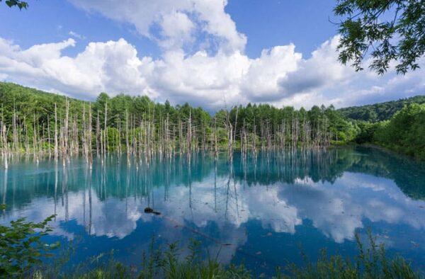 北海道 美瑛 白金 青い池