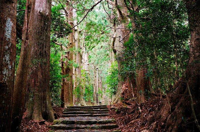 旅サラダ ゲストの旅 和歌山 熊野古道 川湯温泉 湯の峰温泉 那智