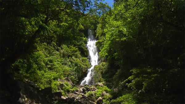 奄美大島 舟行の滝